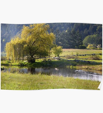 spring by the pond  Poster