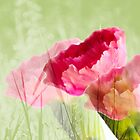 carnation garden by lensbaby