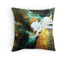 White Christmas Tree Worm in Bonaire Throw Pillow
