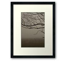 Misty Vineyard Framed Print