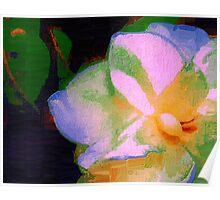 Gardenia ivory Poster
