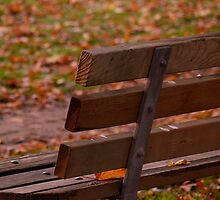 Autumn Bench by Rae Tucker
