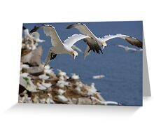 Gannets hovering over the colony, Saltee Island, County Wexford, Ireland Greeting Card