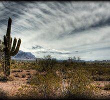 Morning in the Desert by Saija  Lehtonen