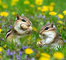 Bountiful Generosity Chipmunk Art by Christina Rollo