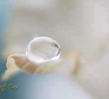 Crystal drop by Lyn Evans