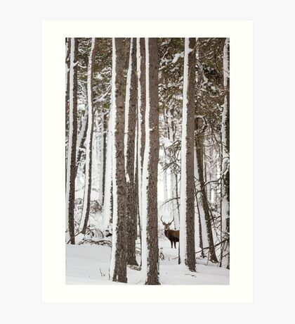 Winter Forest Stag  Art Print