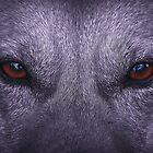 Eyes that see by Alfredo Encallado