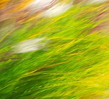 Fall Grass Colorful Nature Abstract Art by Christina Rollo