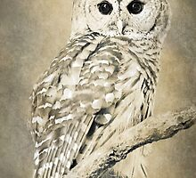 Barred Owl Bw Sepia Art by Christina Rollo