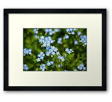 Nature Abstract Wildflowers Forget me nots Framed Print