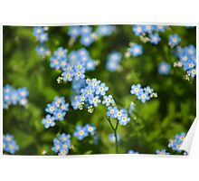 Nature Abstract Wildflowers Forget me nots Poster