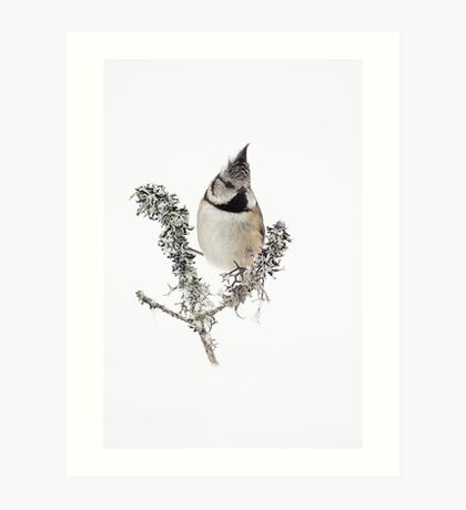 Crested Tit in the winter snow Art Print