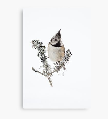Crested Tit in the winter snow Canvas Print