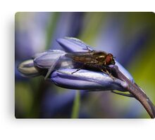 Blubell Flower with insect Canvas Print