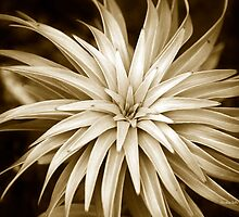 Spiral Abstract Art Monochrome Plant by Christina Rollo