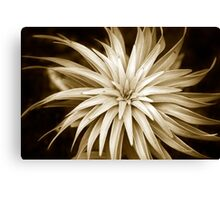 Spiral Abstract Art Monochrome Plant Canvas Print