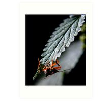 Bug Hiding Art Print