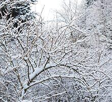 Winter scene by franceslewis