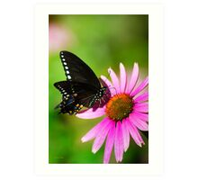 Colorful Butterfly in the Sun Art Print