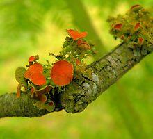 Musgo en la corteza de una rama.............. by cieloverde