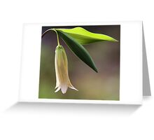 Sessile Bellwort (Wild Oats) Greeting Card