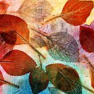 "Autumn is Coming to Australia by Belinda ""BillyLee"" NYE (Printmaker)"
