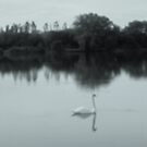 Swan lake in black and white by anaisnais