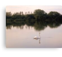 Swan on lakes in Somerset Canvas Print