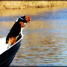 King of The World by Carrie Bonham