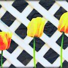 3 Tulips by Carrie Bonham