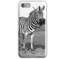 Zebra II iPhone Case/Skin