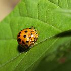 Lady Bug! by Tim Harper