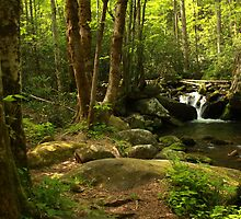 Small Falls In The Forest by J. L. Gould