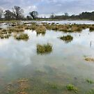 - Water meadows at Chelsworth by Christopher Cullen