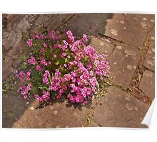 Courtyard posy. Poster