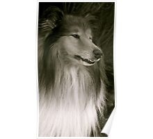 The Rough Collie  Poster