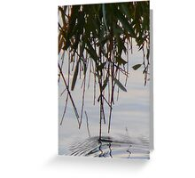 Willow fingers 02 Greeting Card