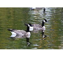 Two Canadian Geese Photographic Print