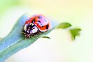 Harlequin ladybird by missmoneypenny