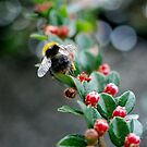Bokeh Bee by Rebecca Eldridge