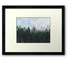 SeniorDesigns Rhode Island Reeds Framed Print