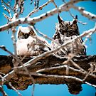 The Disapproving Owls by ParkerRice