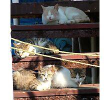 Greek Cats Photographic Print