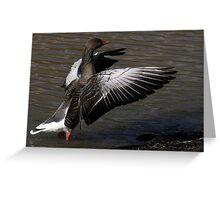 The Greylag Goose Greeting Card