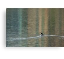 Solitary Tufted Duck Canvas Print