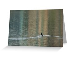 Solitary Tufted Duck Greeting Card