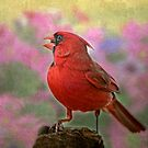 Cardinal in the Garden by Bonnie T.  Barry