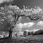 A Tree Blows in the Wind by Jon Delorme