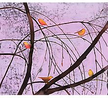 Early Spring 2 Photographic Print